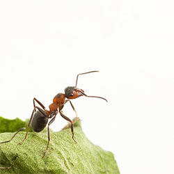garden-ants-class-action-lawsuits-and-tcpa01